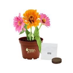 Customized Terra Cotta Wee Planter Kit